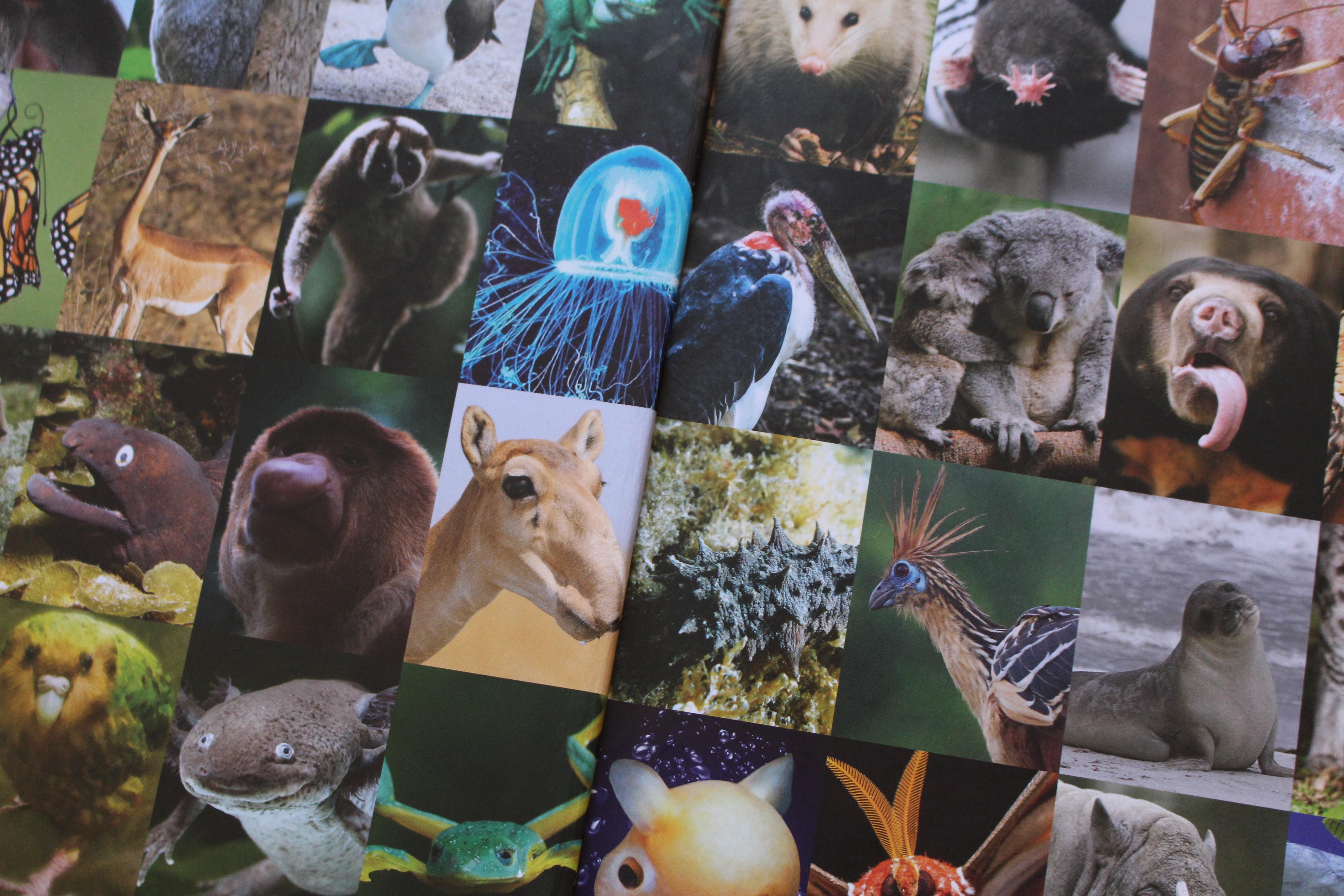 alverdens fugle og dyr